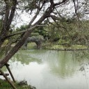 池と石橋 樹の影から