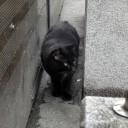 道頓堀の猫 すたすた行く