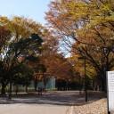 砧公園の紅葉。まだちょっと早い / Lumix GF-5 / SIGMA 19mm F2.8 DN