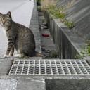 奥武島の猫