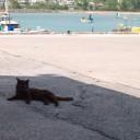 奥武島の猫 漁港