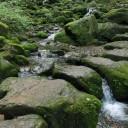 岩石園 (ロックガーデン)